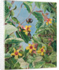 59. A Brazilian climbing shrub and hummingbirds, 1880 by Marianne North