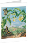 73. Yellow Bignonia and swallow-tail butterflies with a view of Congonhas, Brazil, 1880 by Marianne North