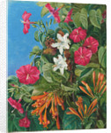 77. Wild flowers at Morro Velho, Brazil, 1880 by Marianne North