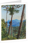 83. View from Mr. Weilhorn's house, Petropolis, Brazil,1880 by Marianne North