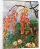 98. Flowers of a coral tree and king of the flycatchers, Brazil, 1880 by Marianne North