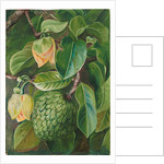 104. Foliage, flowers, and fruit of the soursop, 1873 by Marianne North