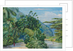 116. The bog-walk, Jamaica, with bread fruit, banana, cocoanut, and other trees, 1973 by Marianne North