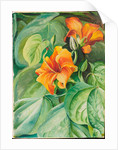 118. Foliage and flowers of the mahoe, Jamaica, 1872 by Marianne North