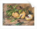 119. Foliage, flowers and fruit of the nutmeg tree, and humming bird, Jamaica, 1872 by Marianne North