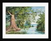 129. An old cotton tree at the ford, Morant's Bay, Jamaica, 1872 by Marianne North