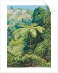 131. Tree fern and whish-whish in the Punch Bowl valley, Jamaica, 1872 by Marianne North