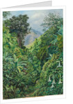132. Valley behind the artist's house at Gordontown, Jamaica, 1872 by Marianne North