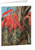 139. A Brazilian epiphyte or air plant, 1873 by Marianne North