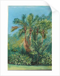 159. Group of small palms, Rio Janeiro, Brazil, 1873 by Marianne North