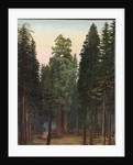 171. Looking into the Calaveras Grove of big trees, California, 1875 by Marianne North