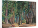 173. Under the redwood trees at Goerneville, California, 1875 by Marianne North