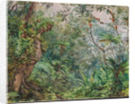 179. View in the fernwalk, Jamaica, 1872 by Marianne North