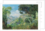 181. View on the Flamsted Road, Jamaica, 1872 by Marianne North