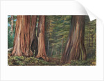 189. The Mariposa Grove of big trees, California, 1875 by Marianne North