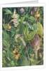 192. Wild flowers from the neighbourhood of New York, 1871 by Marianne North