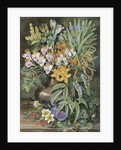 12. Some Wild Flowers of Quilpue Chili. by Marianne North