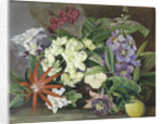 147. Cultivated Flowers; painted in Jamaica. by Marianne North