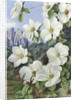 190. Foliage and Flowers of the Californian Dogwood, and Humming Birds. by Marianne North