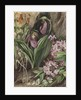 194. Wild Flowers from the Neighbourhood of New York. by Marianne North