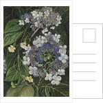 273. Flowers of Darjeeling, India. by Marianne North