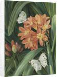 352. Clivia miniata and Moths, Natal. by Marianne North