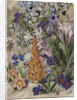 423. A Medley from Groot Post, South Africa. by Marianne North
