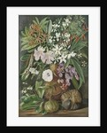 498. A Selection of Flowers. Wild and Cultivated, with Puzzle Nut, Mahe. by Marianne North