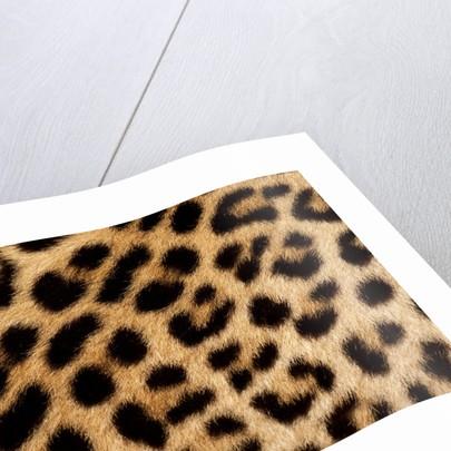 Leopard Skin by Sara Porter
