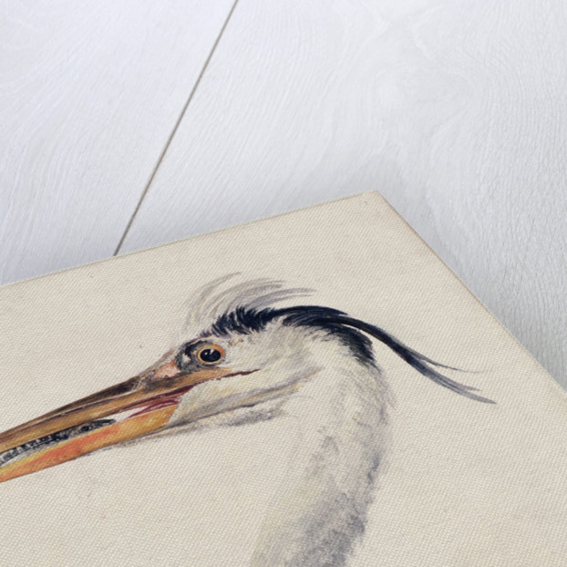Heron, from The Farnley Book of Birds, c.1816 by Joseph Mallord William Turner