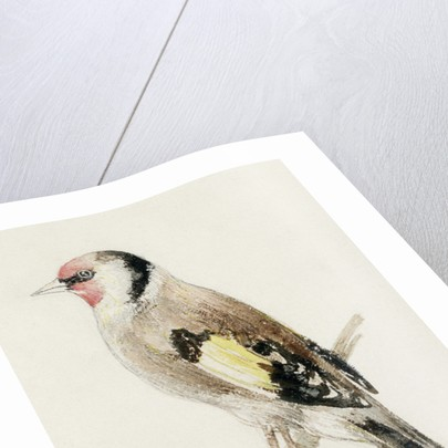 Goldfinch, from The Farnley Book of Birds, c.1816 by Joseph Mallord William Turner