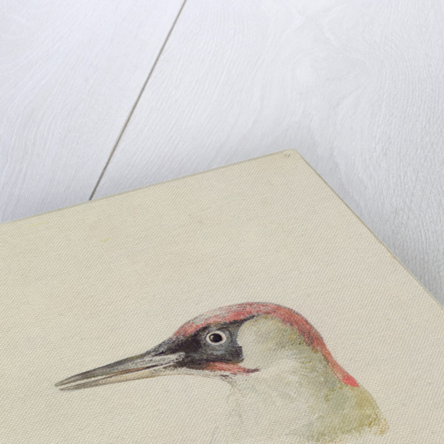 Woodpecker, from The Farnley Book of Birds, c.1816 by Joseph Mallord William Turner
