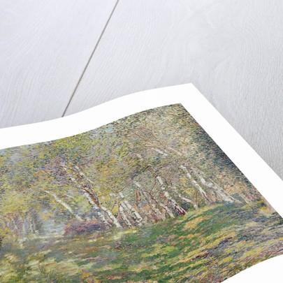 Silver Birches by Adriaan Josef Heymans