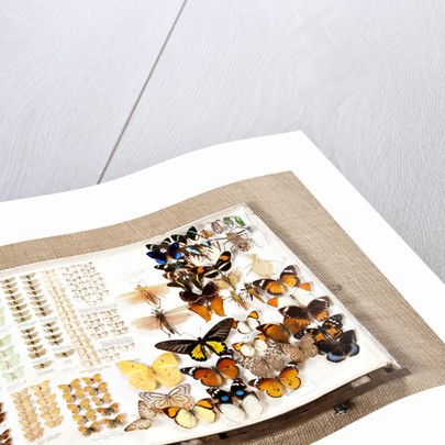 Drawer Of Insects by Sara Porter