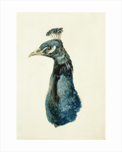 Peacock, from The Farnley Book of Birds, c.1816 by Joseph Mallord William Turner