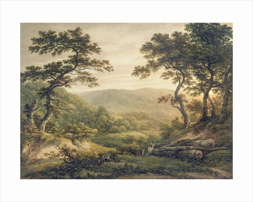 Needlewood Forest, Hampshire by John Glover
