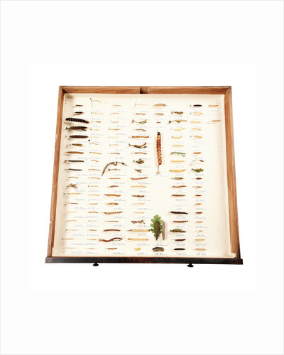 Drawer Of Caterpillars by Sara Porter