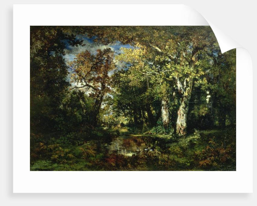 The Forest at Fontainebleau, 1870 by Narcisse Virgile Diaz de la Pena