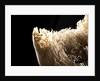 Cassowary Skull by Sara Porter