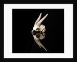Bovid Skull by Sara Porter
