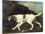Phillis, a Pointer of Lord Clermont's, 1772 by George Stubbs