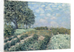 The Market Gardens, 1874 by Alfred Sisley