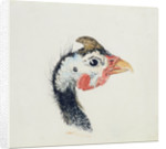 Guinea Fowl, from The Farnley Book of Birds, c.1816 by Joseph Mallord William Turner