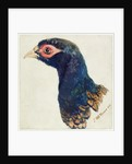 Cock Pheasant, The Farnley Book of Birds, c.1816 by Joseph Mallord William Turner