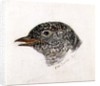 Cuckoo, from The Farnley Book of Birds, c.1816 by Joseph Mallord William Turner
