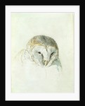 White Barn Owl, from The Farnley Book of Birds, c.1816 by Joseph Mallord William Turner