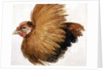 Game-Cock, from The Farnley Book of Birds, c.1816 by Joseph Mallord William Turner