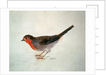 Robin, from The Farnley Book of Birds, c.1816 by Joseph Mallord William Turner