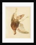 Grouse, from The Farnely Book of Birds, c.1816 by Joseph Mallord William Turner