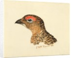 Head of Grouse, from The Farnley Book of Birds, c.1816 by Joseph Mallord William Turner